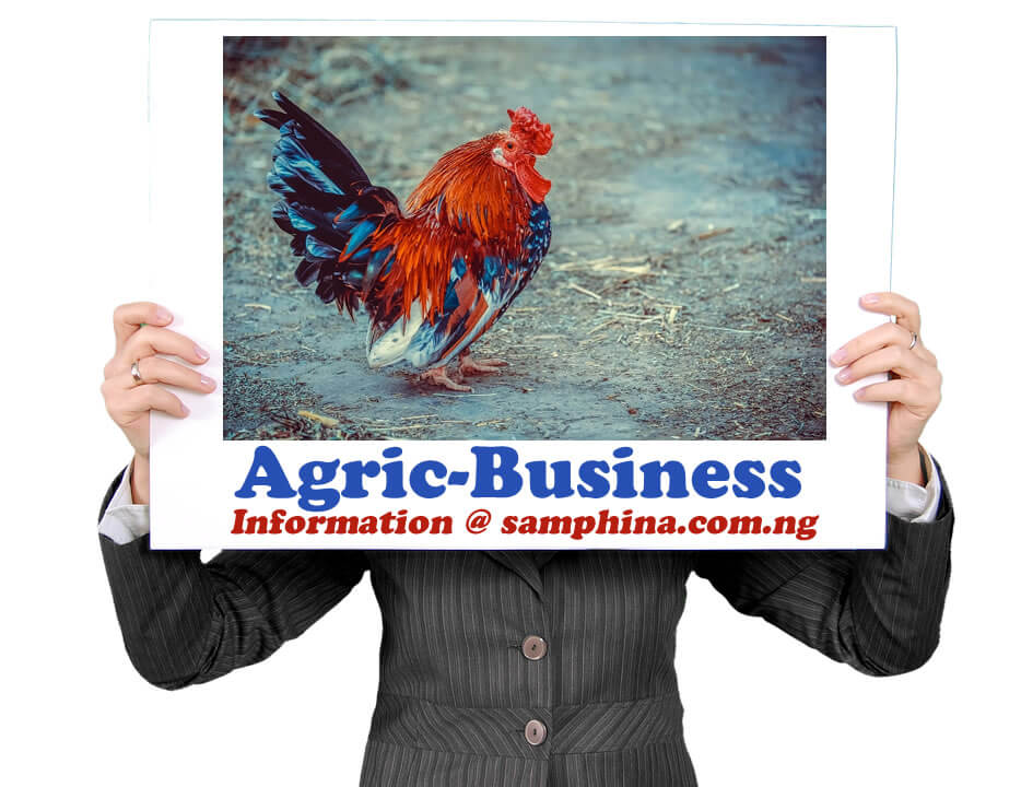 Agric Business