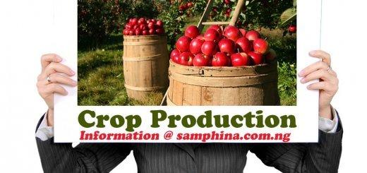 Crop Production